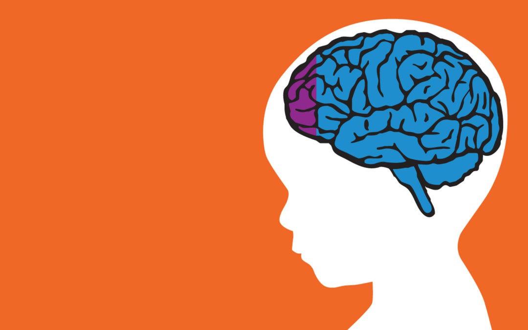 não bộ của trẻ.jpg