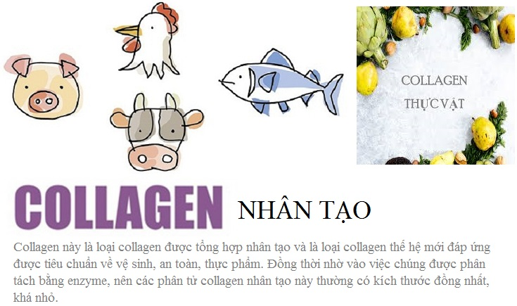 Nguồn gốc của collagen-1.jpg