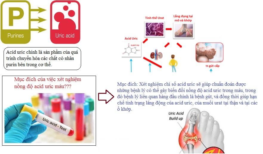 Ngưỡng an toàn của acid uric máu-1.jpg