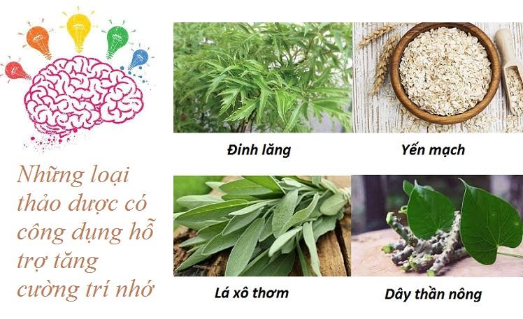 Những loại thảo dược có công dụng hỗ trợ tăng cường trí nhớ-1.jpg