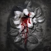 Blood60