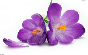 violet532003