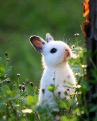 Mami Thỏ